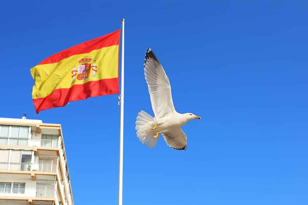 bandera españa y paloma
